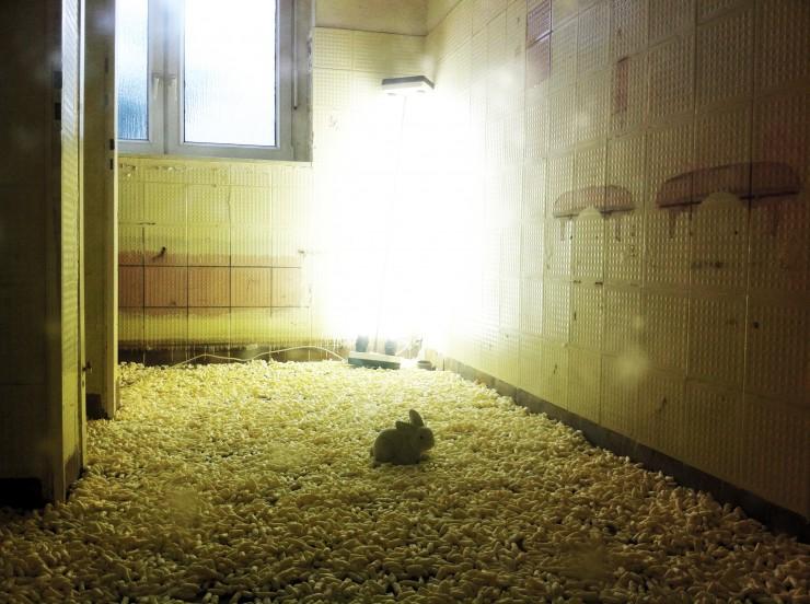 Das Kaninchen, Foto: Hanne Lauch